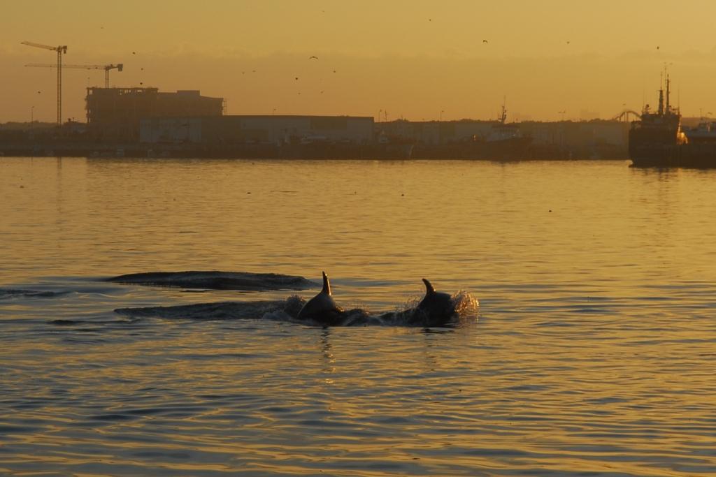 Delfine Peniche