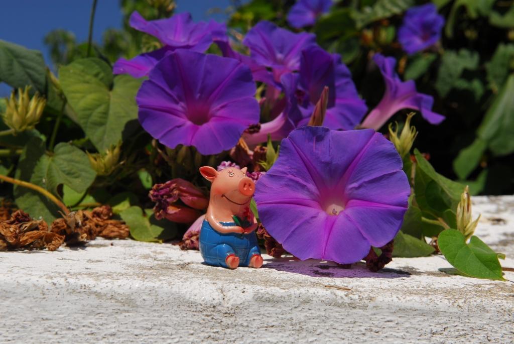 Gustav und die blaue Blume