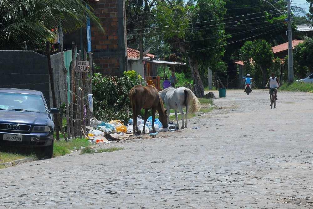 Streundende Pferde