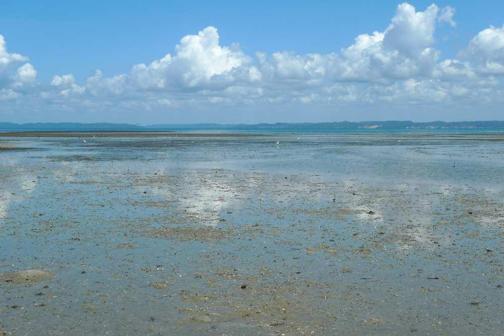 Tropische Wattlandschaft