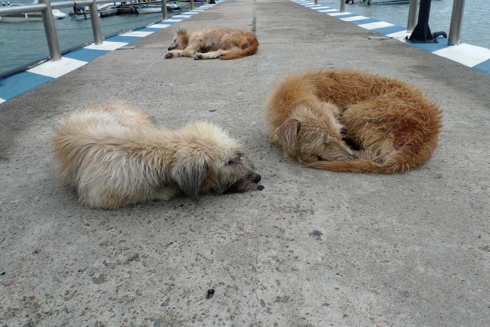 Bloß keine schlafenden Hunde wecken...