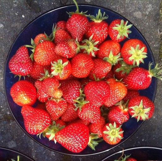 Erdbeeren aus meinem Garten, noch ohne Schlag