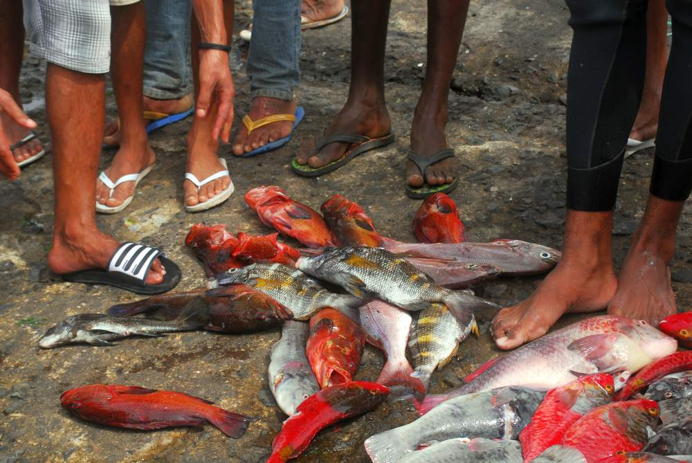 Fischmarkt Santo Antao (17)