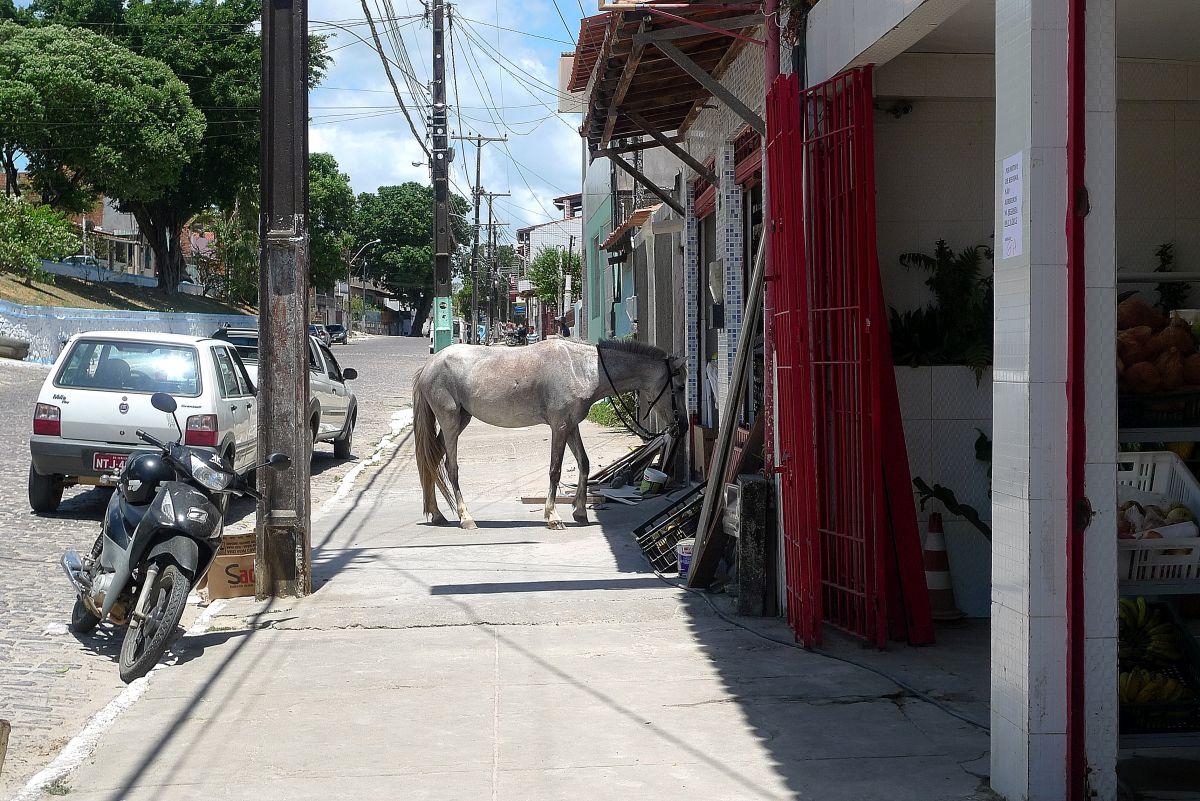 Es steht ein Pferd vor der Tür