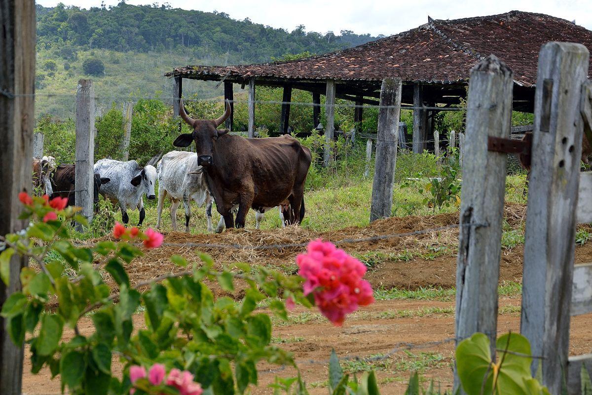 Fazenda Ita (31)