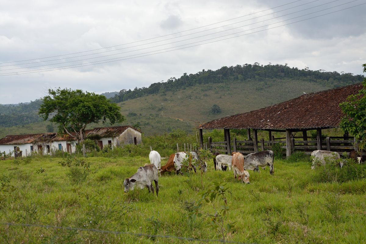 Fazenda Ita (8)