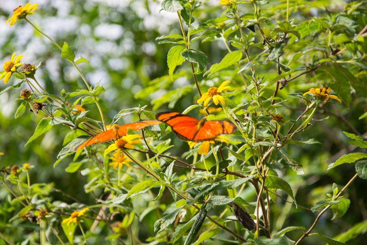 Wir sahen eindeutig mehr Schmetterlinge als Vögel!