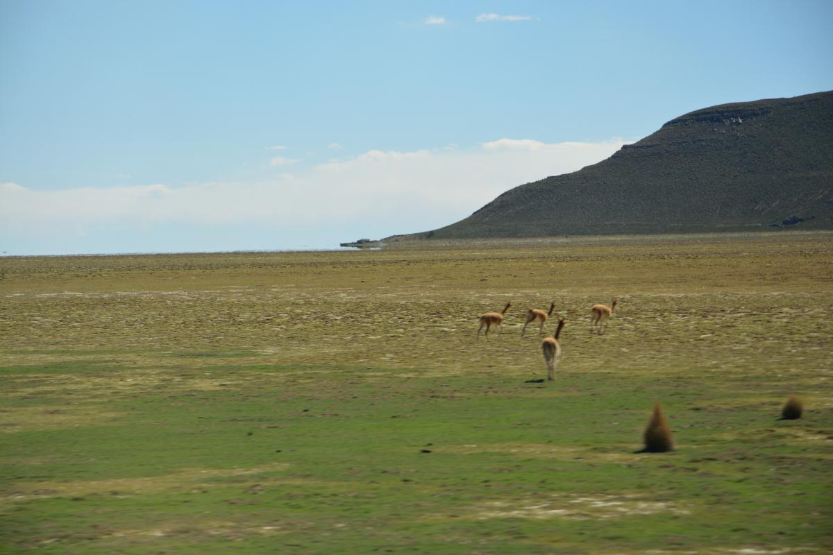 Altiplano, Bolivien