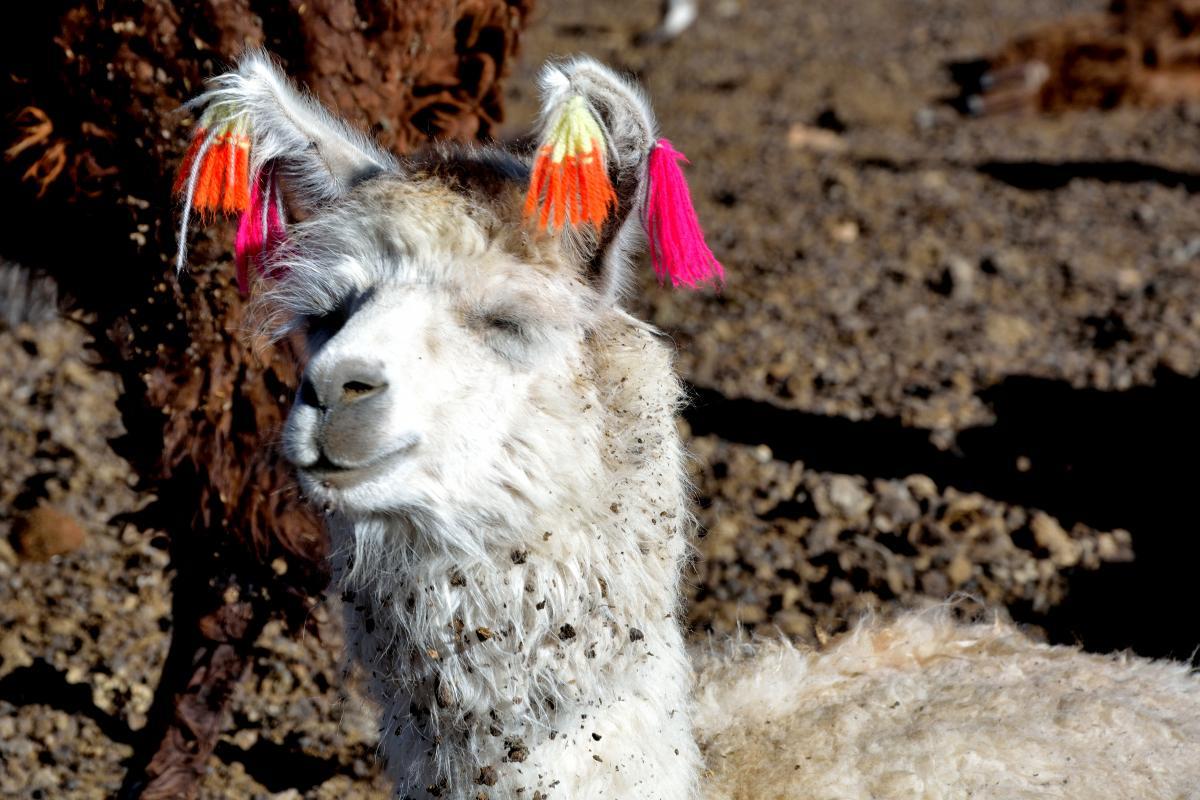 Solar de Uyuni Tour von Tupiza aus, 2. Tag: Lagune, Flamingos, Vulkane