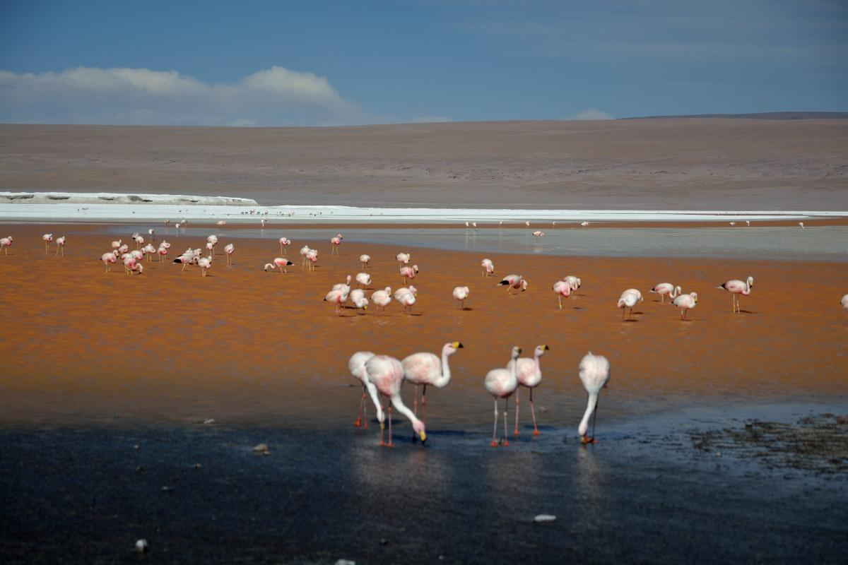 Laguna Colorada mit Flamingos, Uyuni Tour
