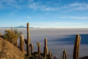 Salar de Uyuni - Kakteem auf der Isla Incahuasi