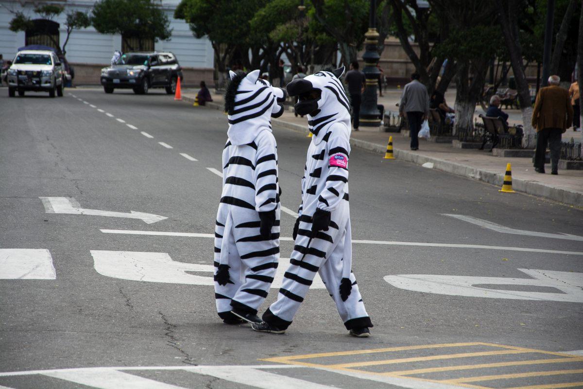 Lebender Zebrastreifen in Sucre