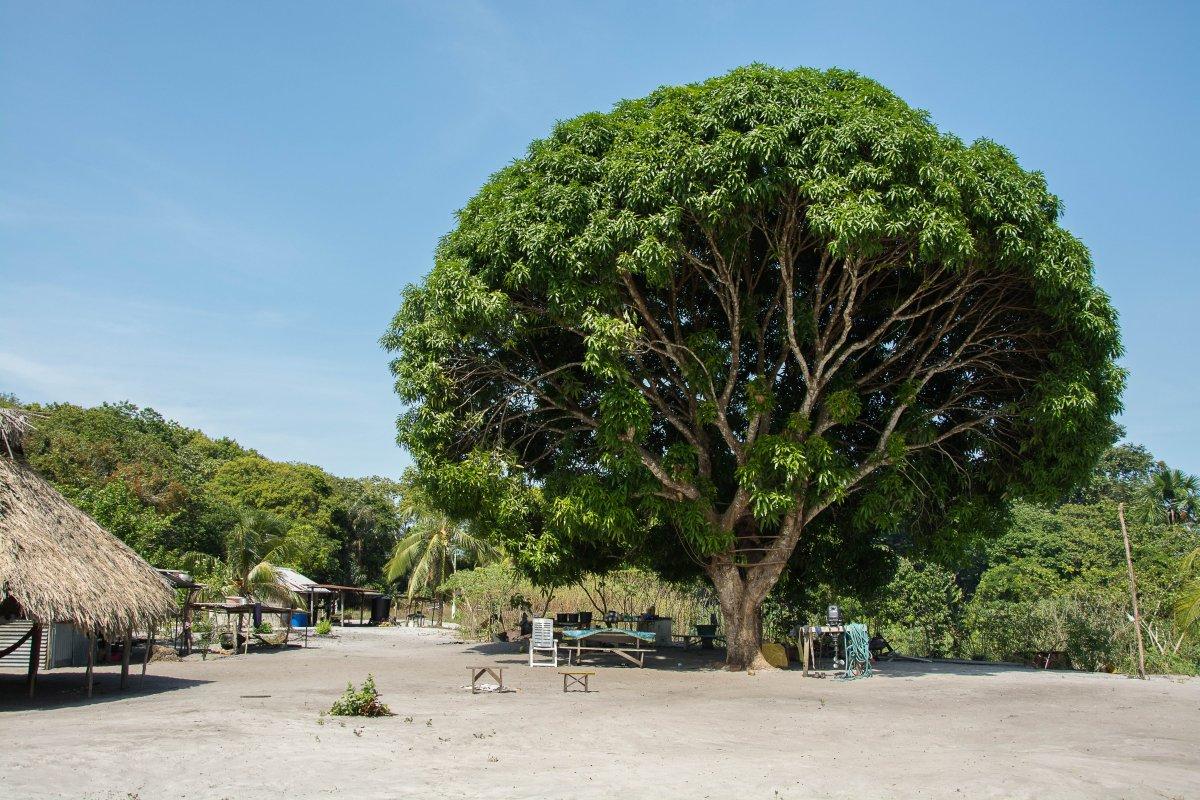 Gekocht und gelebt wird unter palmgedeckten Untertänden oder unterm Mangobaum