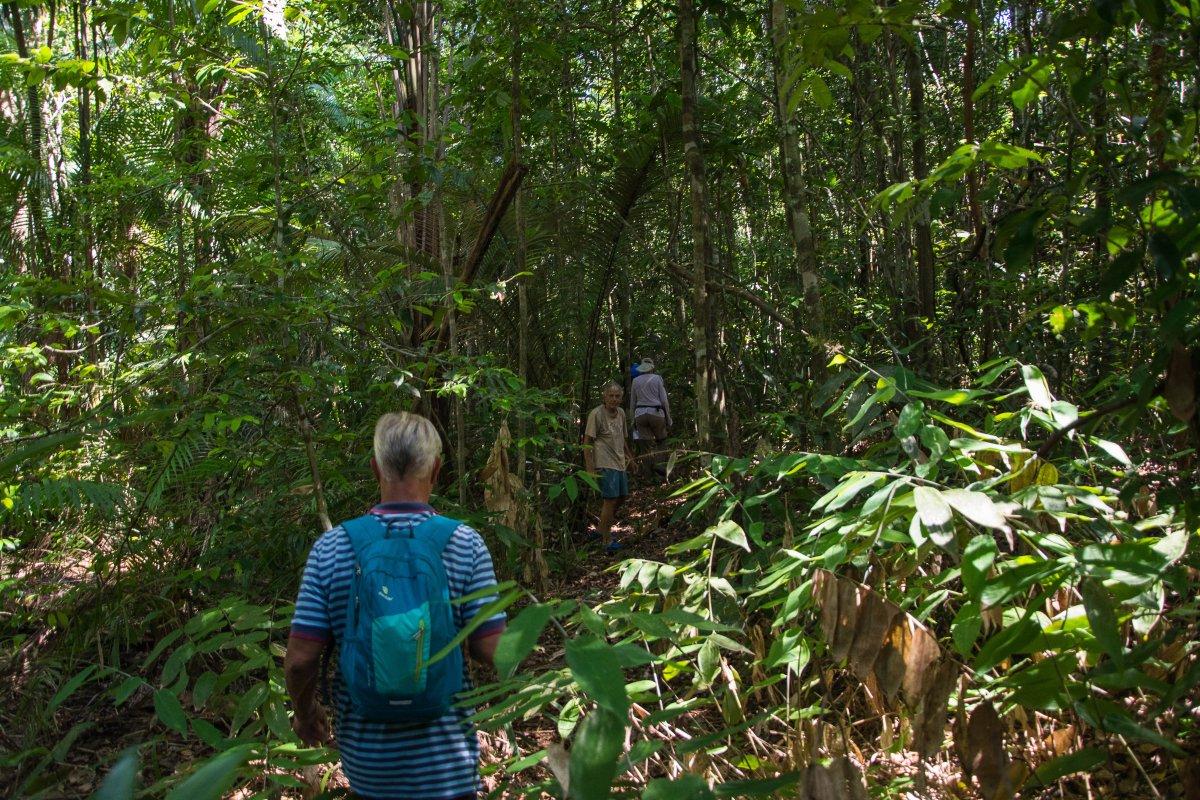 Ausfliúg in den Dschungel bei Tageslicht