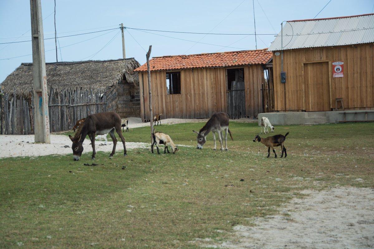 Die Dorfweide in Lencois