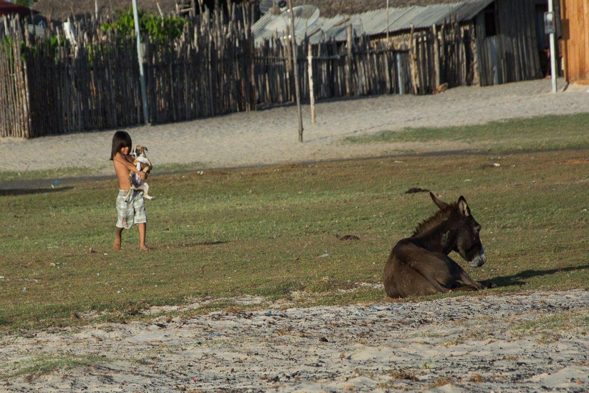 Mädchen, Hund und Esel