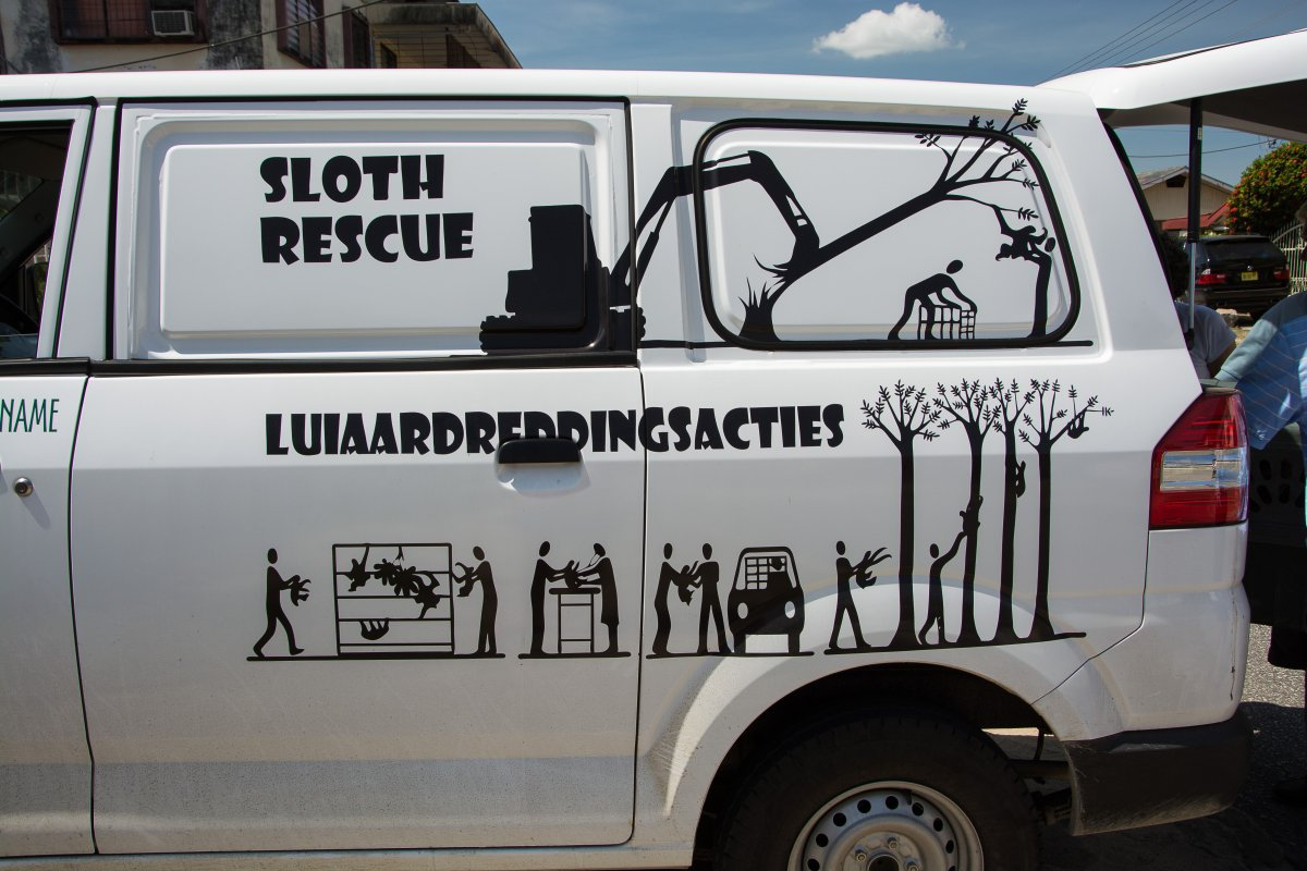 Sloth Rescue