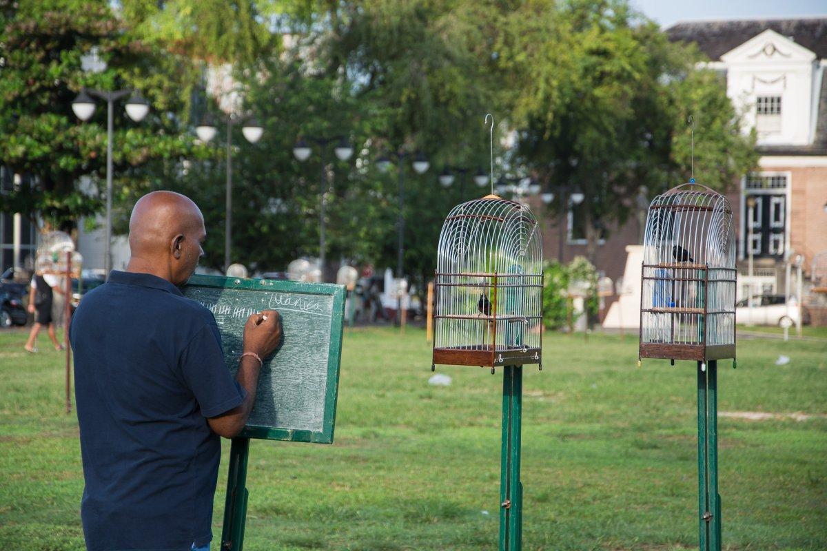 Songbird Contest