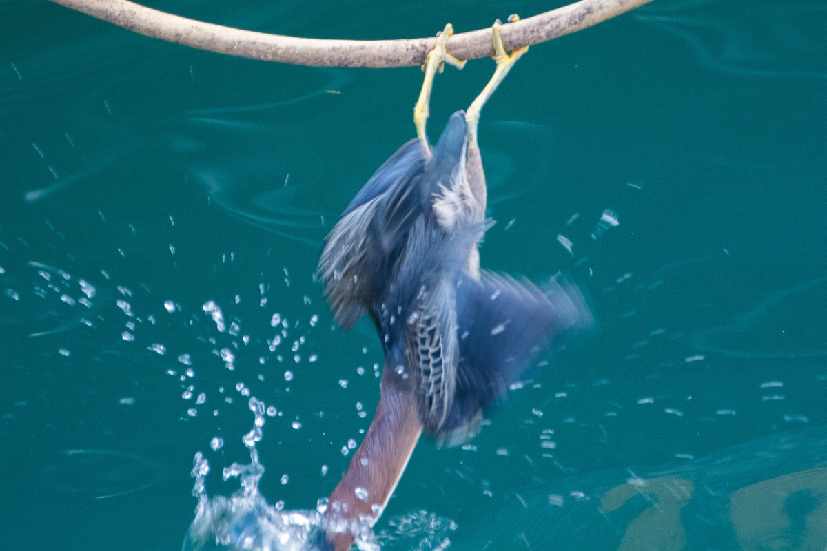 Vogel in Grenada - Segeln mit Yemanja