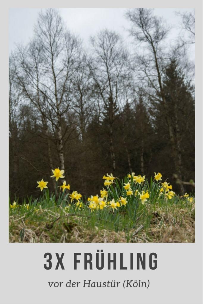 3x Frühling vor der Haustüre (Köln)