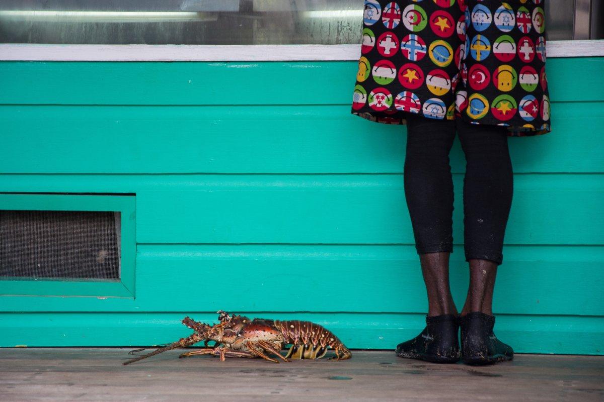 Hummer beim Brotkauf, Mustique - Segeln mit Yemanja