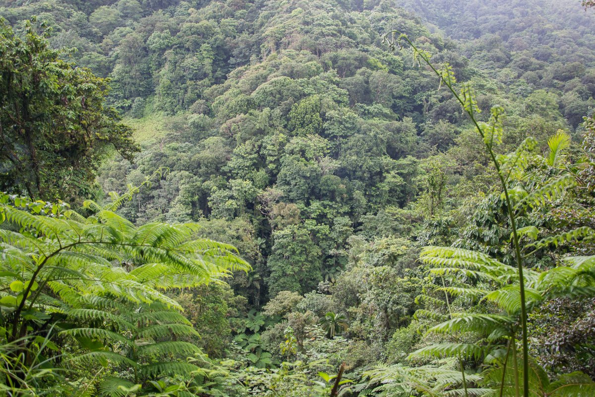 Des Catries Forest Walk, St. Lucia