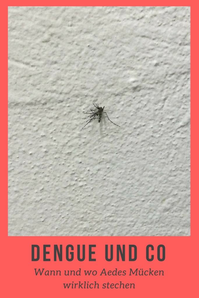 Wann und wo die Übeträgermücken von Dengue und Co. wirklich stechen