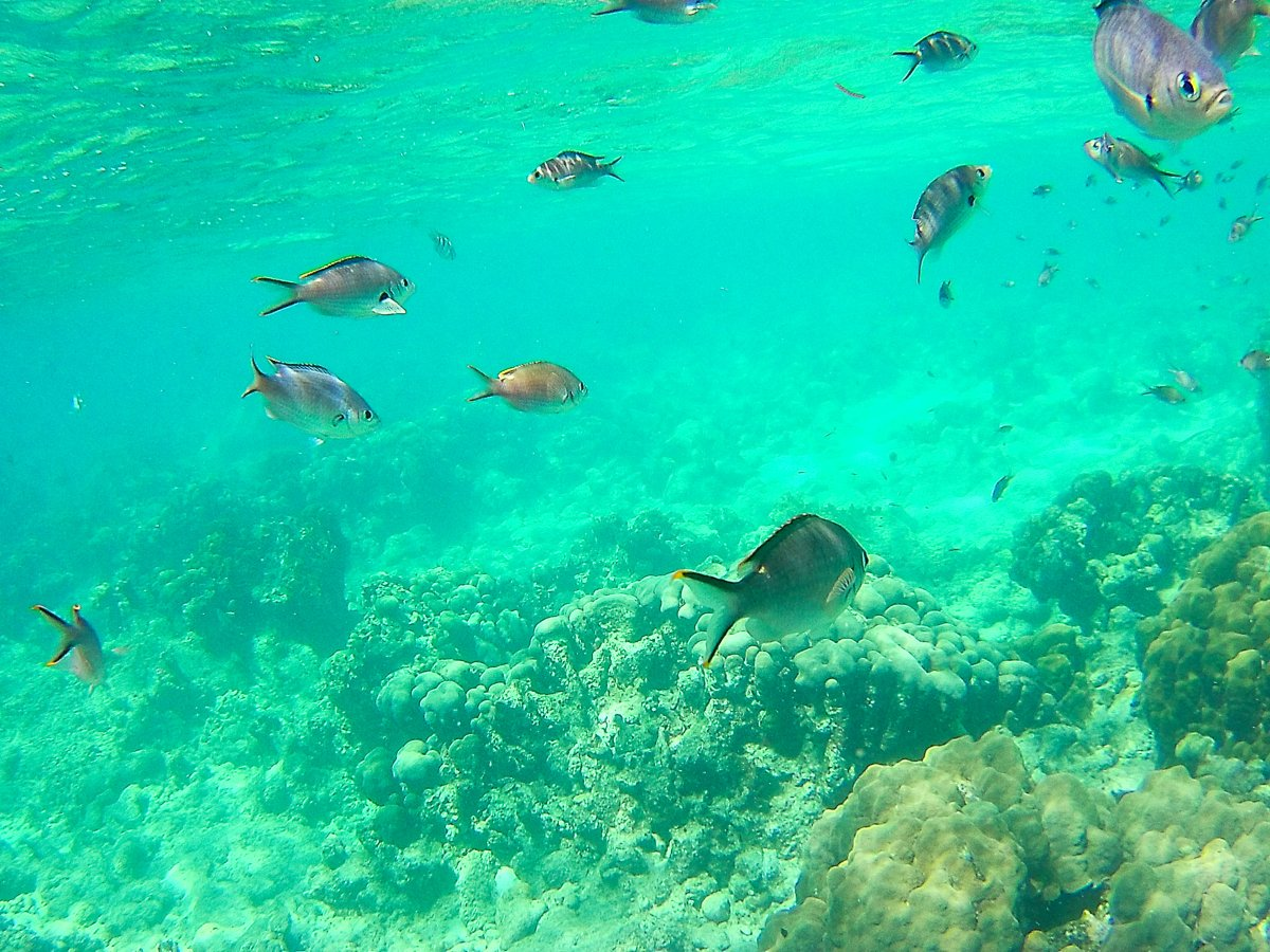 Reserve Jaques Cousteau, Guadeloupe