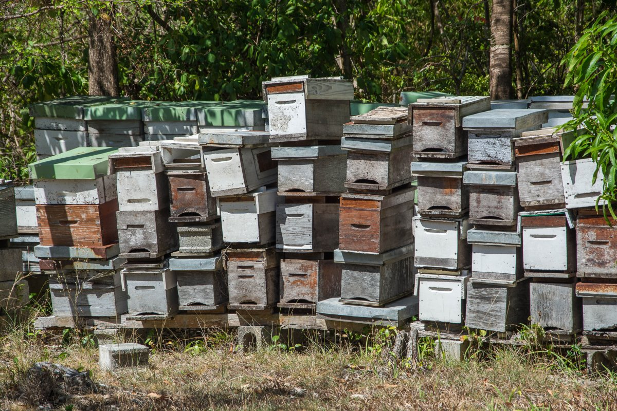Bienenstöcke auf Marie Galante
