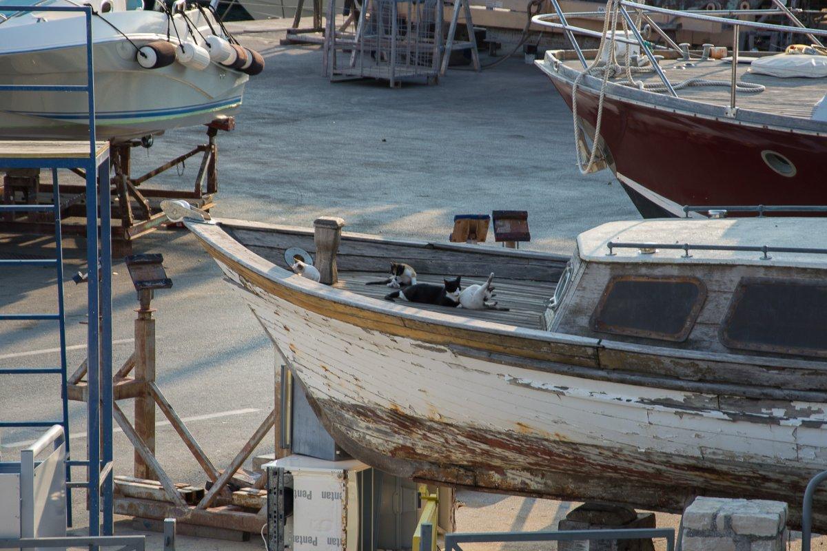 Istrien - Vrsar, www.sy-yemanja.de