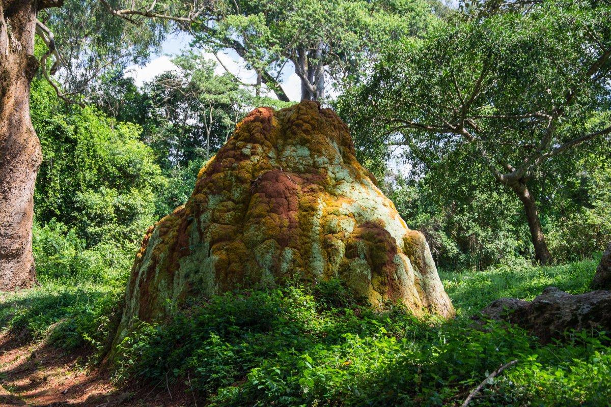 Botanicher Garten in Entebbe, www.sy-yemanja.de