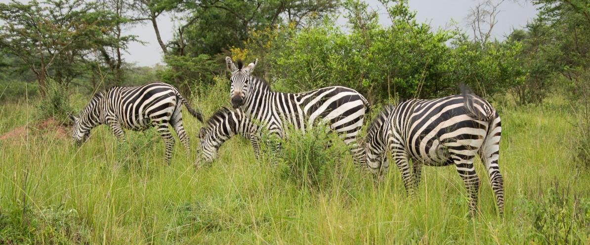 Lake Mburo National Park, Uganda, www.sy-yemanja.de