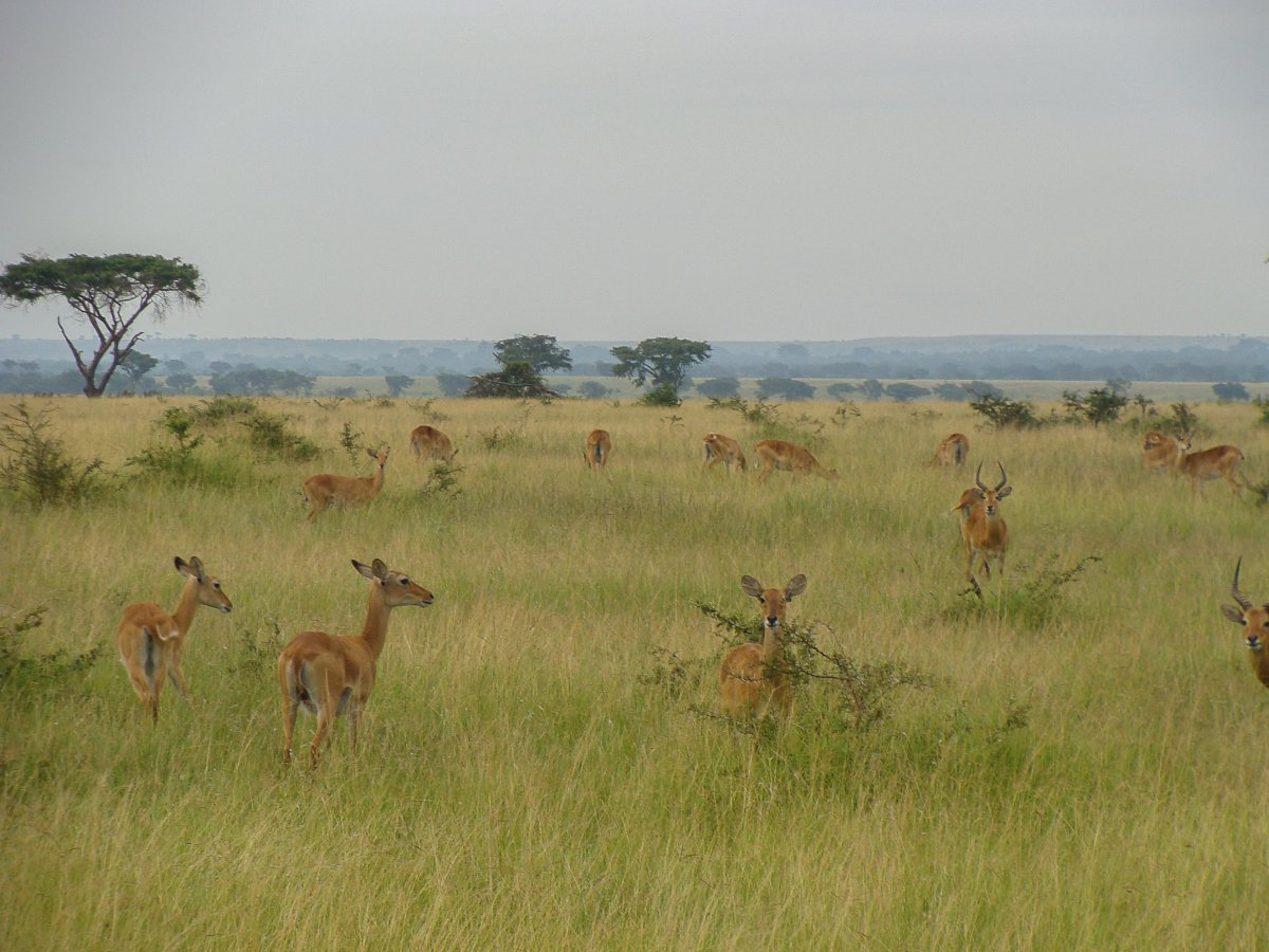 Ishasha, Uganda, www.sy-yemanja.de