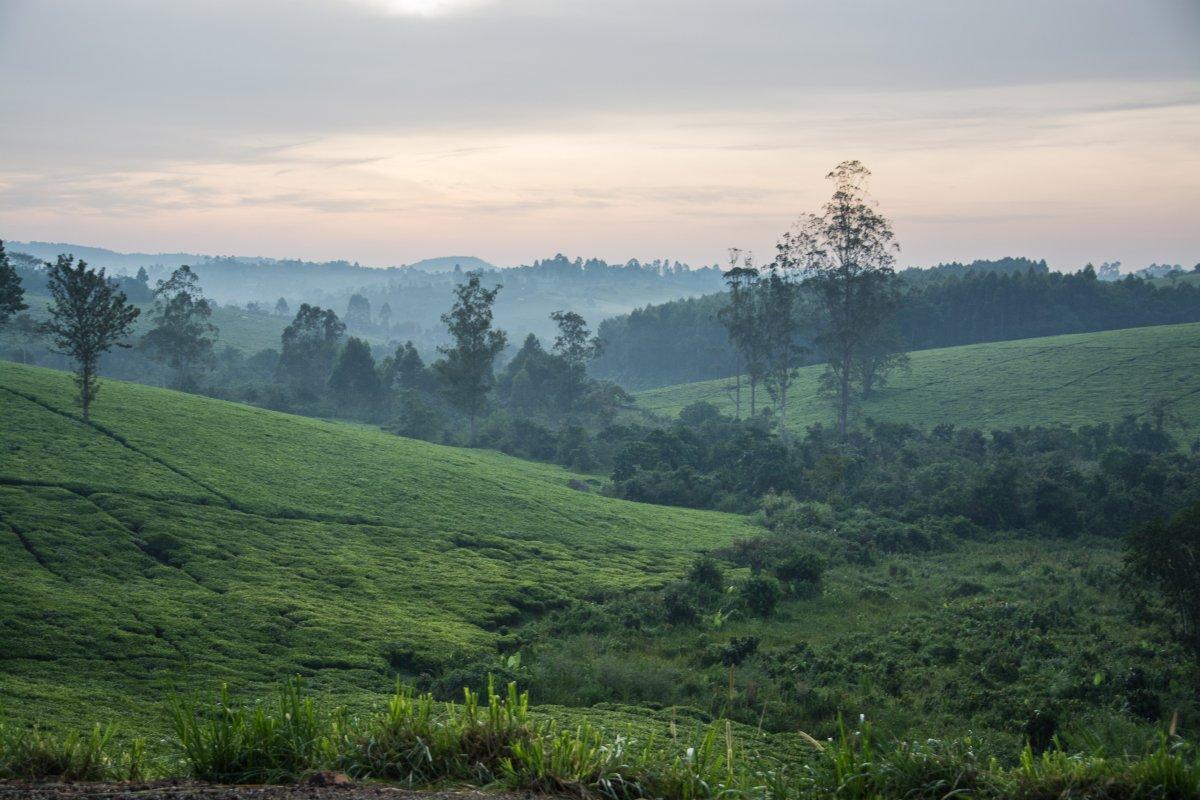 Kluges Guestfarm, Uganda, www.sy-yemanja.de