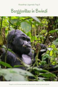 Bei den Berggorillas im Bwindi Impenetrable Forest - www.sy-yemanja.de
