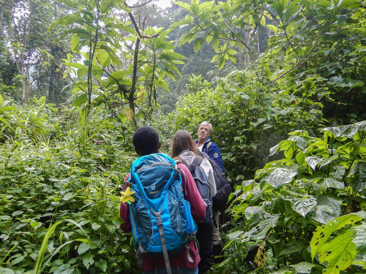 Bwindi Impenetrable Forest, Uganda, www.sy-yemanja.de