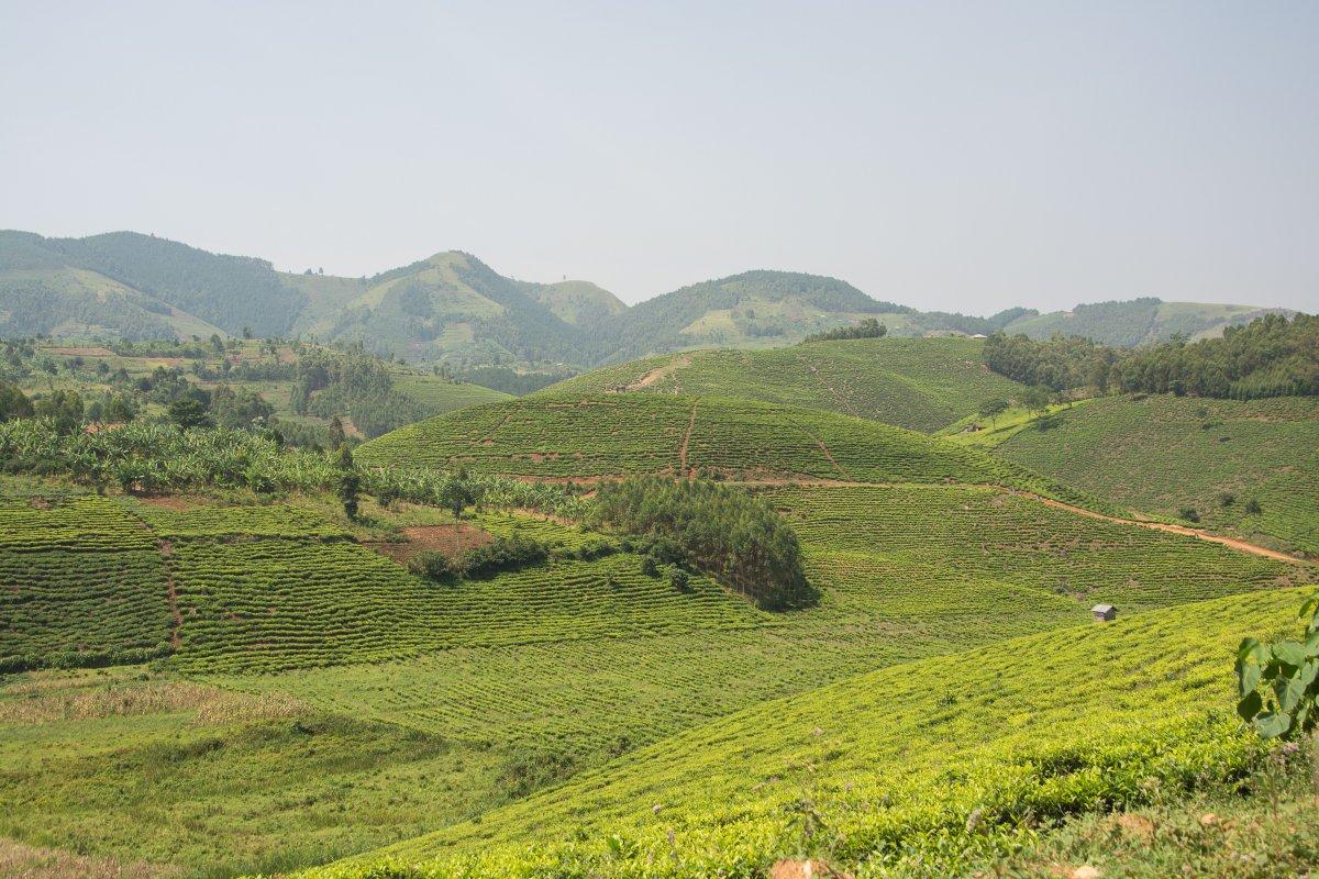 Uganda, www.sy-yemanja.de