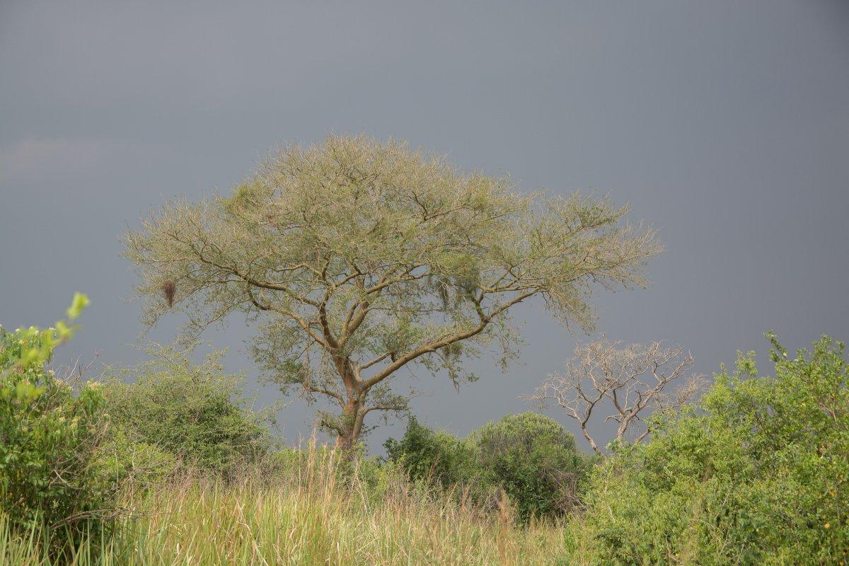 Queen Elizabeth Nationalpark, Uganda, www.sy-yemanja.de