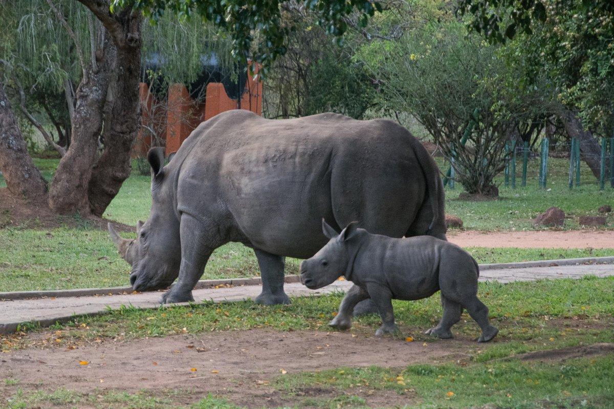 Ziwa Rhino Sanctuary, Uganda, www.sy-yemanja.de