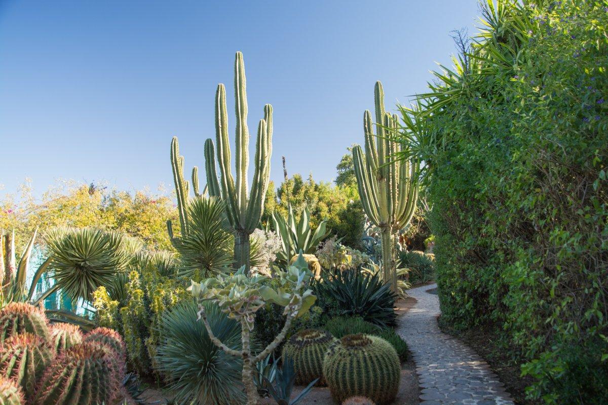 Der  Anima Garten ist ein junger Garten, trotz alter Pflanzen